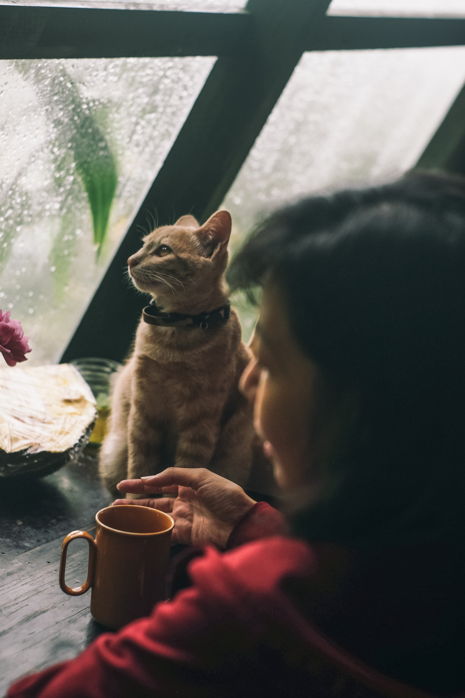 Les dangers à éviter à votre chat
